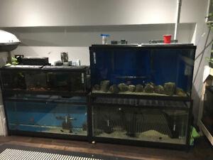 Aquarium setup for sale