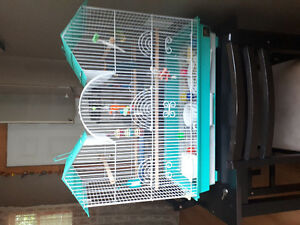 Two female budgies with cages