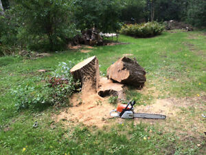 TREE STUMP REMOVAL/GRINDING >book now and save $$$$$ Kitchener / Waterloo Kitchener Area image 9