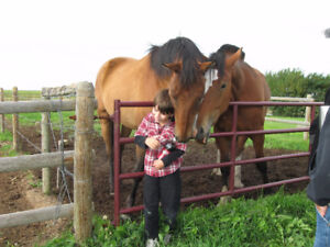 Prairie Equine Rescue is in Need of Pasture