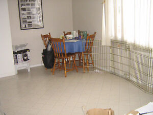 3 bed townhouse in Rundle Park for rent - March 1