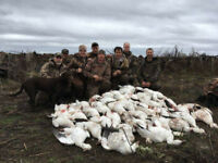 Hunting with Guide in Eastern Ontario - Snow Geese