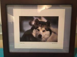 Framed Art (Husky Print)