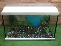Elite style 60 X 30 fish tank