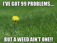 $99 WEED CONTROL