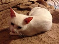 Free 2 year old female cat