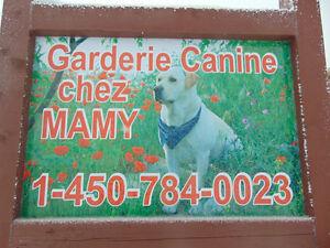 Garderie canine