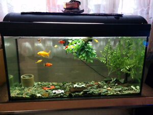 50 gallon fish tank with 10 fish+ stand