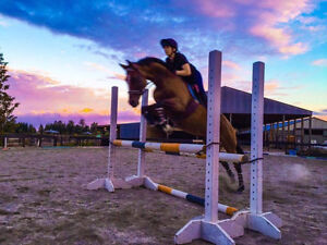 Stunning Athletic Horse ready for Competing
