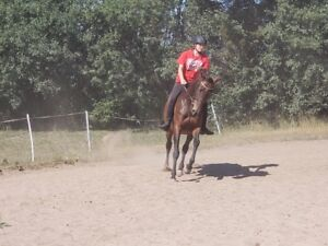 BEGINNER TRAIL MARE OR JUMPER FOR MORE EXPERIENCED RIDER