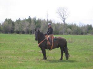 horse initiation / Initiation au monde equestre