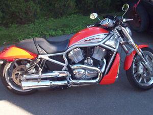 v rod Harley Davidson