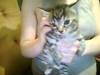 Amazing Kittens Urgently Need Re-Homing Tonight