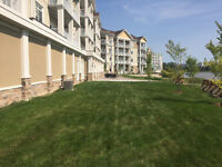 Commercial sod and tree installation! Best price in town!