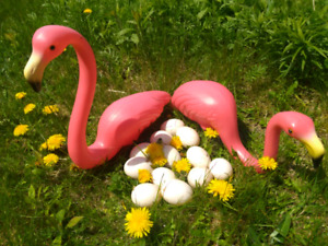 Flamingo eggs for sale !