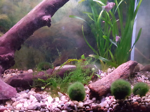 REDUCED! Mid size tank. 37g aquarium with everything you need!!