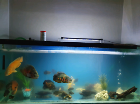 Fish tank/oscars