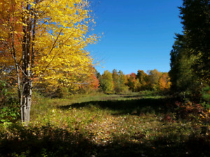 117 Beautiful acres for $89,000 overlooking the Ottawa river