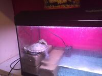 Two free Terrapins