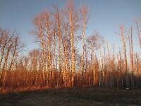 Beautifully treed 3 acre lot, Boyle