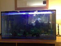 4ft tropical aquarium