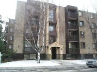 Pet Friendly Executive 1 and 2 Bedroom Suites Starting at $1,100