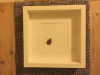 Lady bird picture & frame