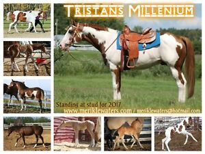 Early Bird Breeding fee discount on Tristans Millenium!