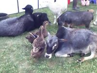 Petting Zoo for School Educational Field Trips, Mobile