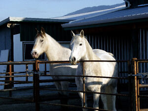 Horses for partial lease