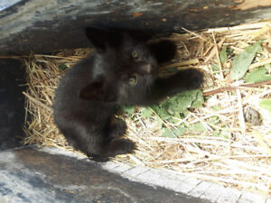 2 male kittens, vet checked, 1st shots and dewomed