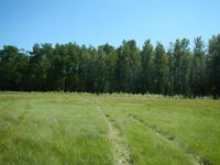5 acres LAND for sale - 50 min North of Edmonton-partially treed