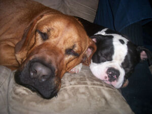 Relaxed Home-based Boarding and Daycare For Your Dog Kawartha Lakes Peterborough Area image 5