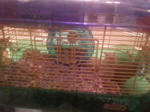 2 cute Gerbils with cage and accessories