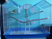 Young female budgie and cage with accessories for sale
