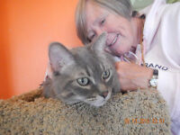 """MISHA""  DECLAWED  --  Fixed & Vaccinated  -- @ Small Things"