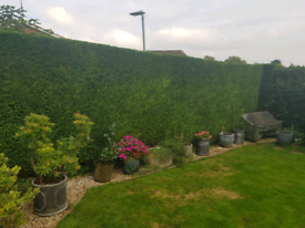 Garden / Gardener / Hedge Cutting Service