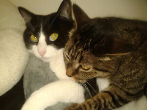 Looking to rehome 2 female adult cats-together or individually.