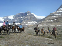 Trail Horse Riding/Packing/ Training  Clinic