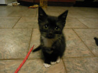 Free Kittens - Ready For A Loving Home!!!