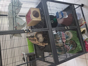 2 cute Chinchillas with huge cage and everything they need.