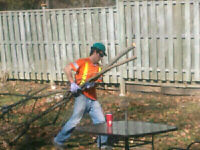 Storm clean up tree removal