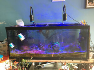 90 gallon salt water fish tank