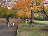 FALL CLEAN UP LEAF REMOVAL LEAVES LAWN RAKING LANDSCAPING