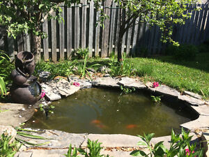 Water Hyacinth Plants for Pond and fish