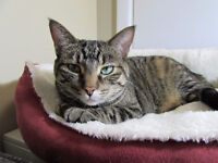3 year old female cat free to loving home