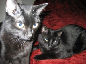 Available FREE  2x Mature Cats for  rehoming