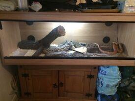 4ft viv with corn snake and full set up