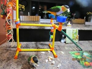 Bird Play Center