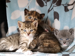 Four Kittens Need Families